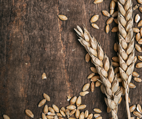 Wheat stalk with wheat berries